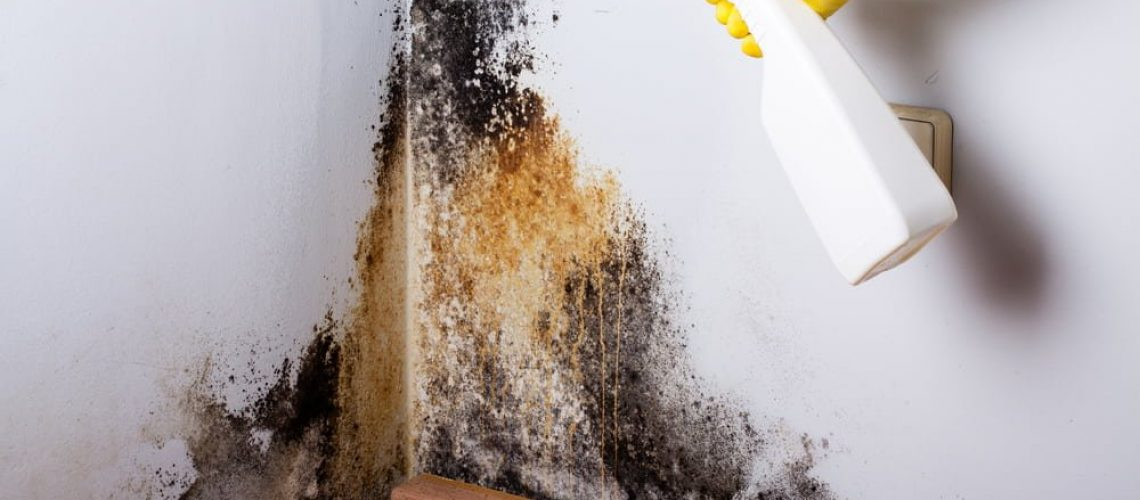 What to do if there is mold in your workplace